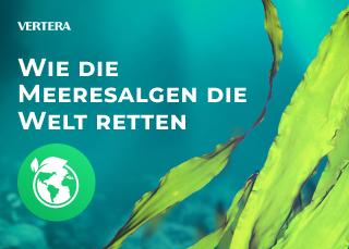 Wie die Meeresalgen die Welt retten