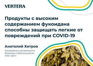 Разработчик продуктов для бренда Vertera Хитров А.А.: продукты с высоким содержанием фукоидана способны защищать легкие от повреждений при COVID-19