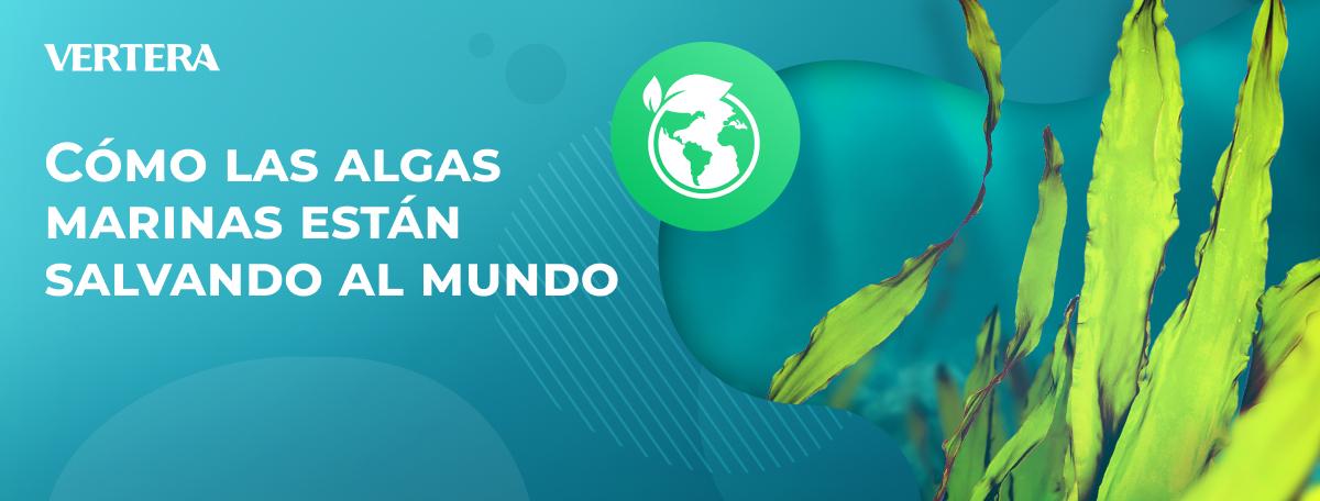 Cómo las algas marinas están salvando al mundo